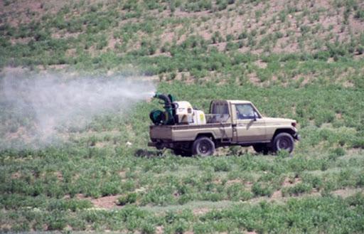 مبارزه با ملخ صحرایی در سیستان و بلوچستان از مرز ۲۴۰۰ هکتار عبور کرد