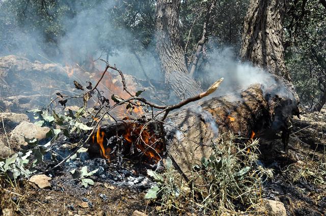 وقوع آتشسوزی،آخرین میخ بر تابوت رویشگاههای زاگرس