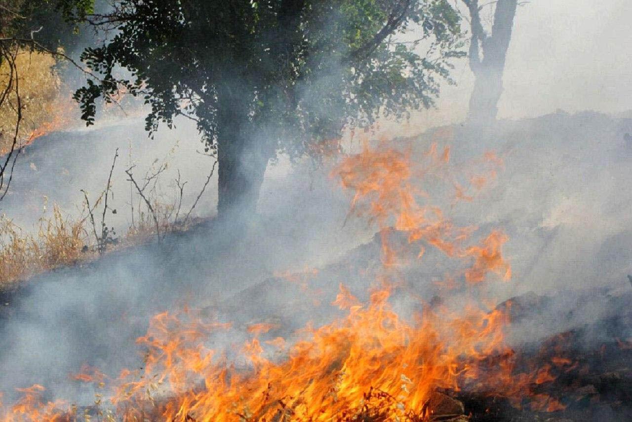 آتش در جنگلهای دنا خاموش شد