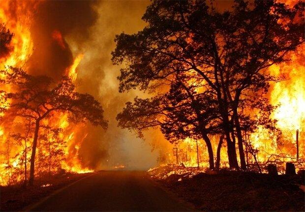 بالگردهایی که دیر رسیدند/ جنگلهای ارسباران در آتش بیتدبیری