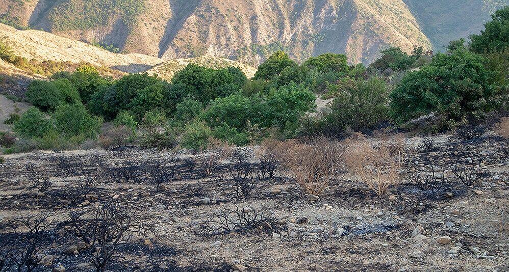 آتش سوزی جنگل های ارسباران خاموش شد
