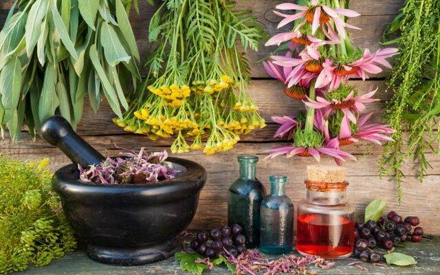 شناسایی 450 گونه گیاهان دارویی در آذربایجانشرقی