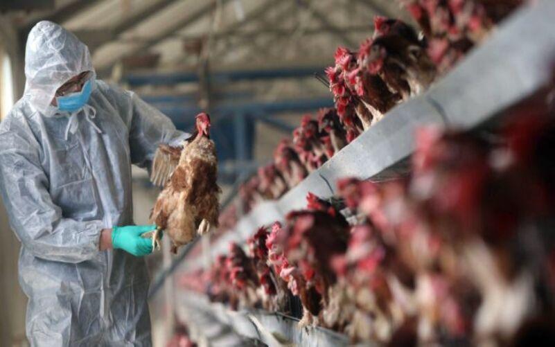 نواختهشدن زنگ خطر آنفلوانزای پرندگان در آذربایجانشرقی