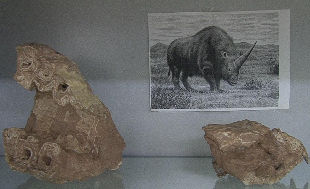 فسیلهای 12 میلیون سال شگفتانگیز مراغه در یک انباری