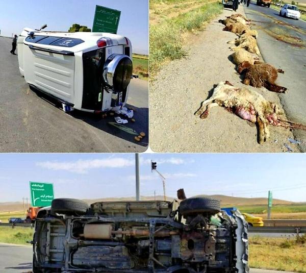 جان باختن چوپان و تلف شدن 22 راس گوسفند در حادثه رانندگی سراب نیلوفر