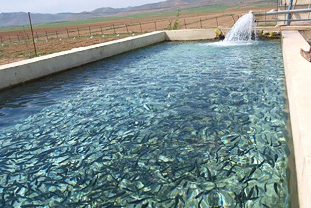 پیشبینی تولید ۱۶۵۰۰ تن انواع آبزی در آذربایجانغربی