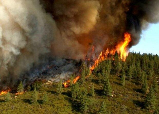 اطفای اولیه آتشسوزی جنگلهای ارسباران