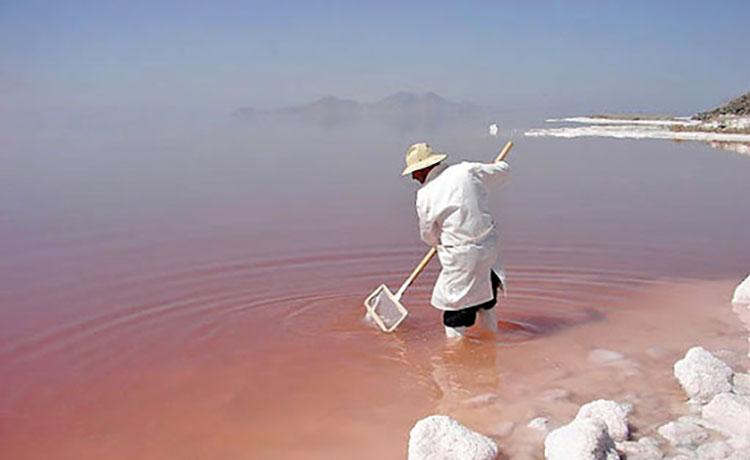 توقف زادآوری تنهاموجود دریاچه ارومیه