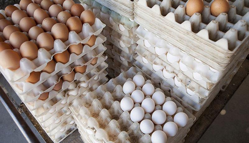 گرانی مواد غذایی، تقاضا برای تخممرغ را افزایش داد