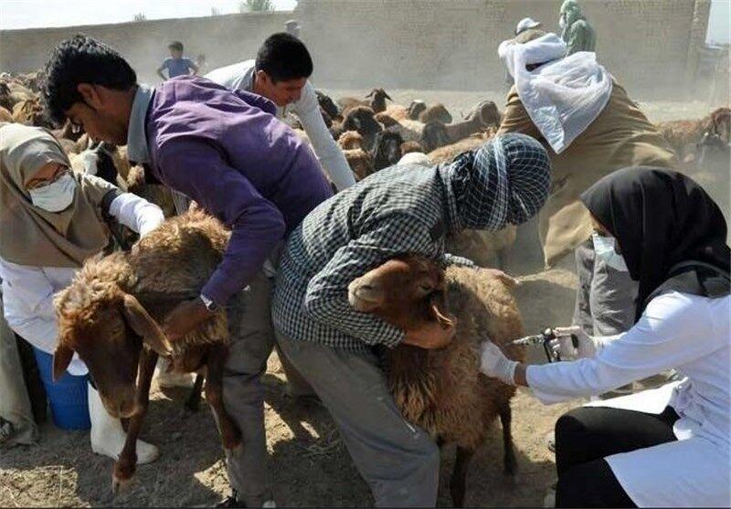 موردی از طاعون در آذربایجانشرقی گزارش نشده است