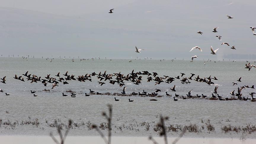 پیشگیری از شیوع آنفلوانزای پرندگان با رصد تالابها و سدهای استان