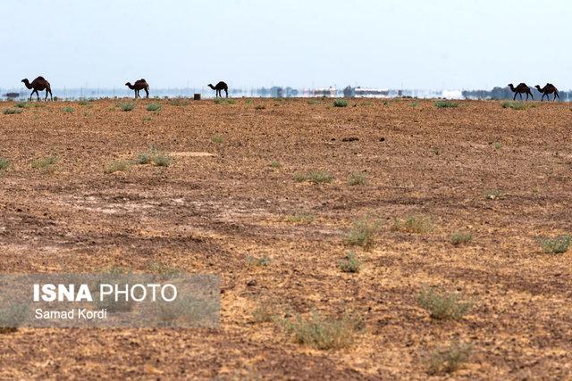 زنجان، استان بیابانی است