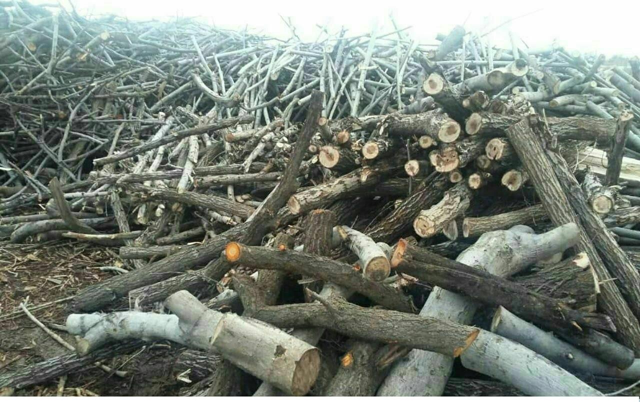 درختان منطقه «قرهداغ» با مجوز جهاد کشاورزی قطع شدهاند