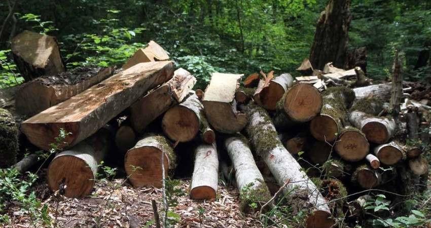 قطع و حمل درختان جنگلی و شهری بدون دریافت مجوز، جرم است