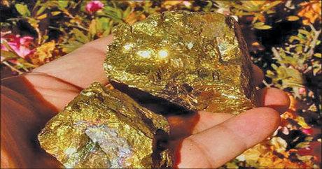 برداشت غیرمجاز طلا در استان