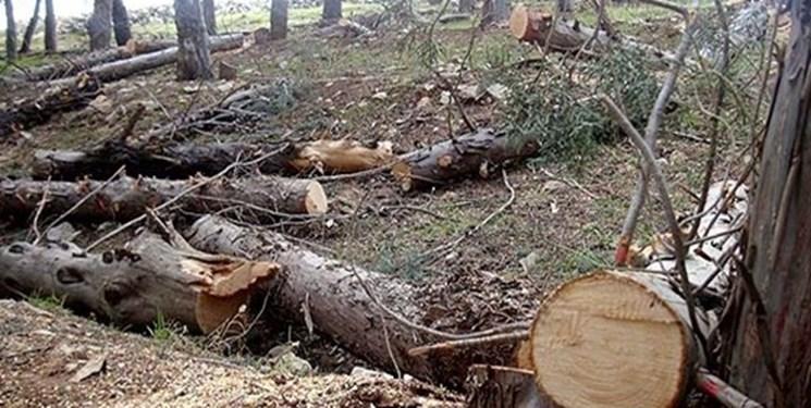 معادله چندمجهولی قطع درختان ارسباران/ واقعیت پرونده قطع درختان جنگلی ورزقان چیست؟