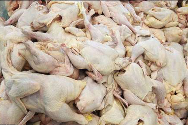 صادرات گوشت مرغ ممنوع میشود