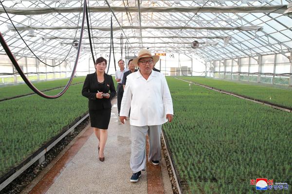 کره شمالی: نصف شدن جیره غذایی روزانه مردم