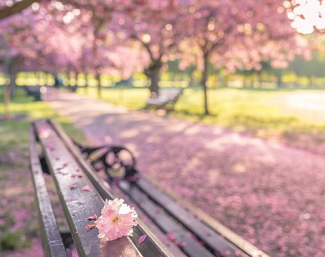 باز کن چشمت را تا که گل باز شود...