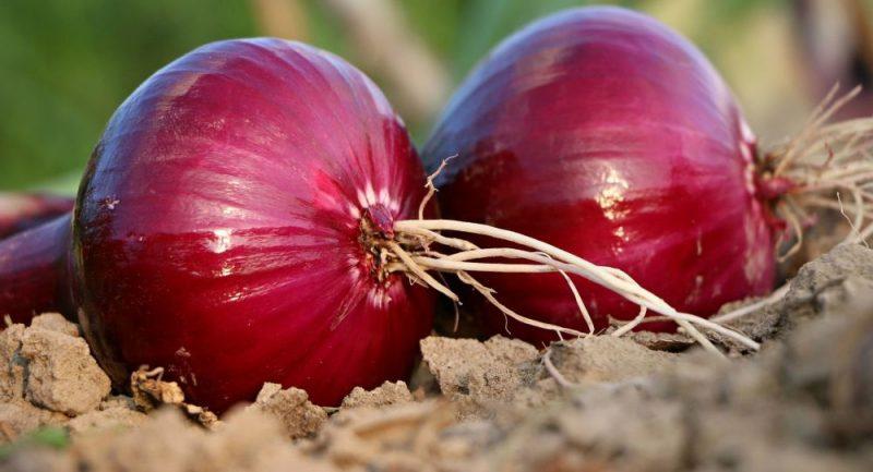 صادرات پیاز و سیب زمینی ممنوع شد