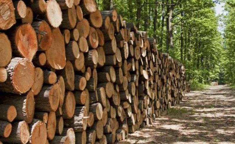 ممنوعیت قطع درختان در منطقه هوراند تا پایان آبان ماه