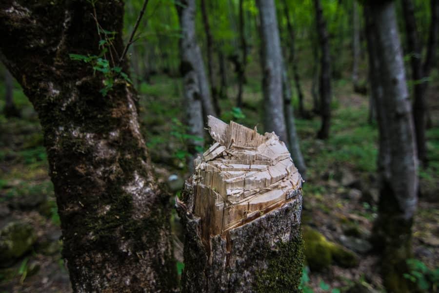 درخواست اداره کل محیط زیست برای ممنوعیت صدور مجوز قطع و حمل درختان باغی