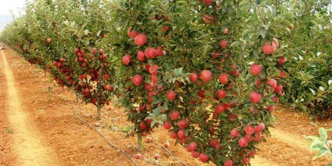 افزایش 25 درصدی صادرات محصولات کشاورزی استان