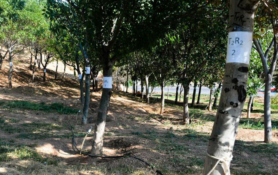 مخترع و مجری اجرای «طرح سیستم آبیاری تزریقی»در بیابان زدایی موثر است