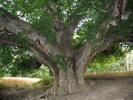 ثبت 5 اثر طبیعی استان در فهرست آثار ملی