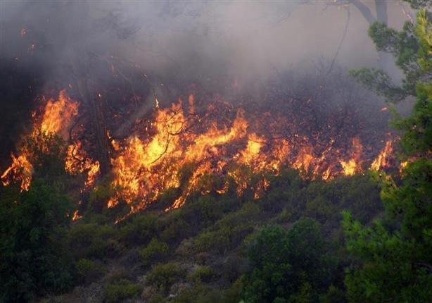 عاملان آتشسوزی جنگلهای ارسباران بازداشت شدند