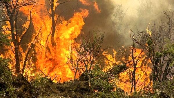آتشسوزی جنگلهای گیلان اطفا شد