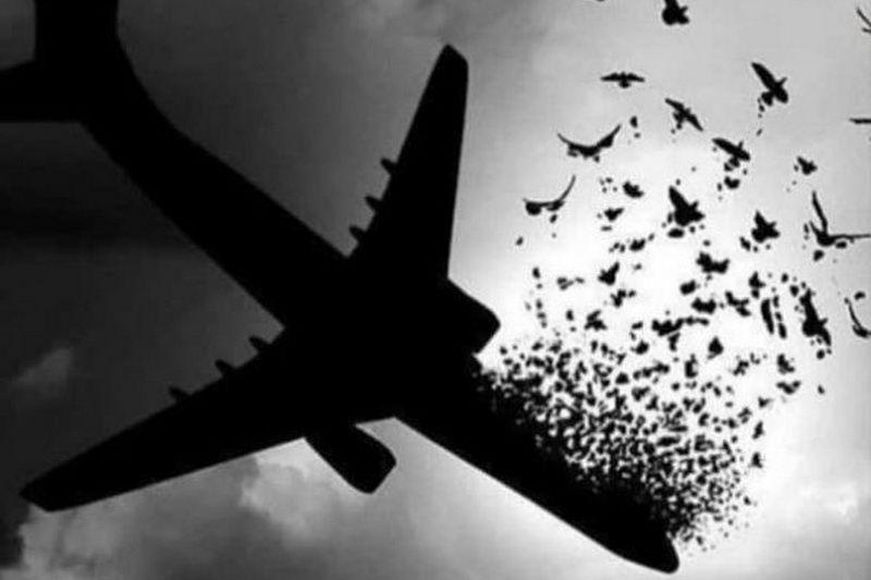 پدرشهید حادثه سقوط هواپیمای اوکراینی: راضی به رضای خداوند هستیم