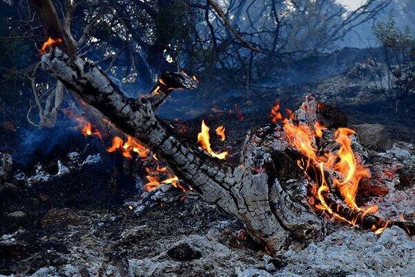 اطفای حریق جنگل های گیلان در ۶۲ نقطه