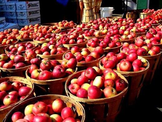 سیب آذربایجان غربی به بازارهای اوراسیا و روسیه صادر میشود